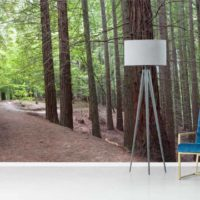 Fotomural bosque sequoyas
