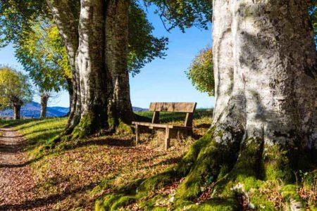 Banco con árboles