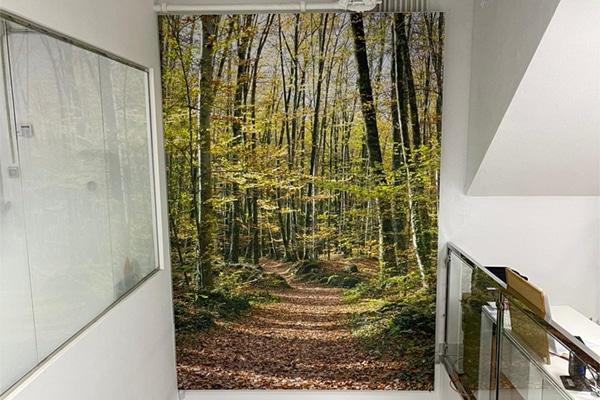 Foto de un camino en el bosque para dar profundidad a la pared de fondo de una escalera