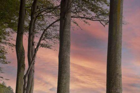 Foto decorativa de unos árboles junto al mar con un fondo de cielo en colores pastel